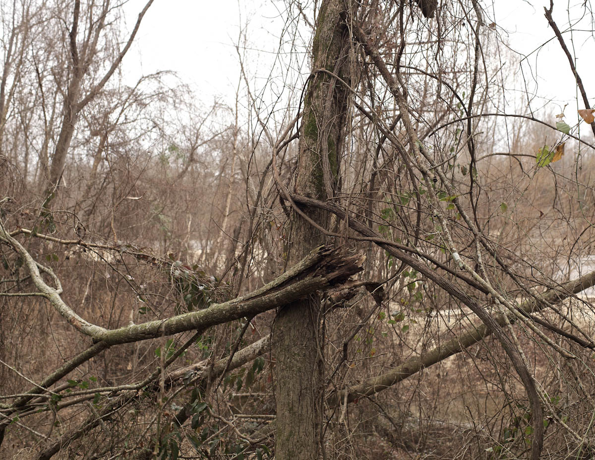 Twisted Branches, Forrest County, MS