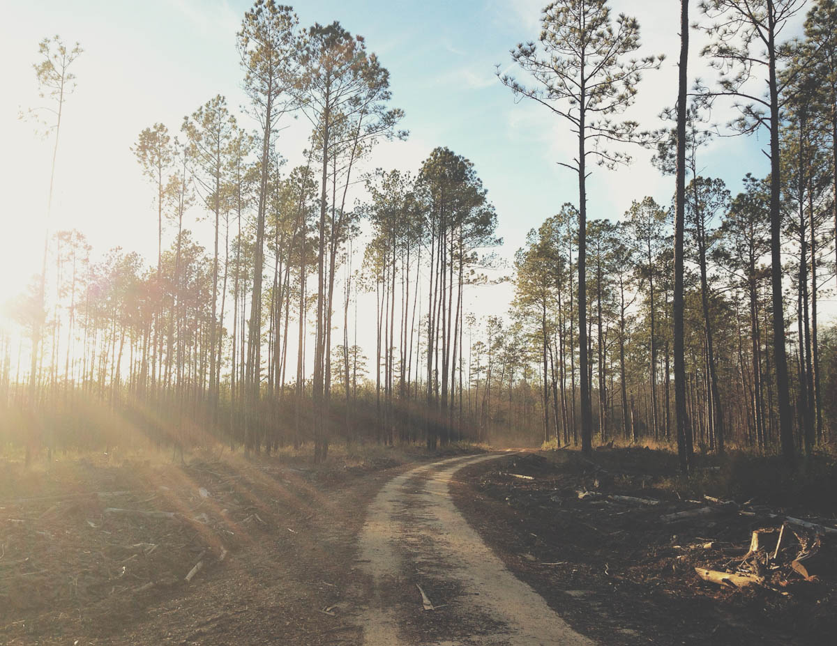 Logging Road, Jones County, MS