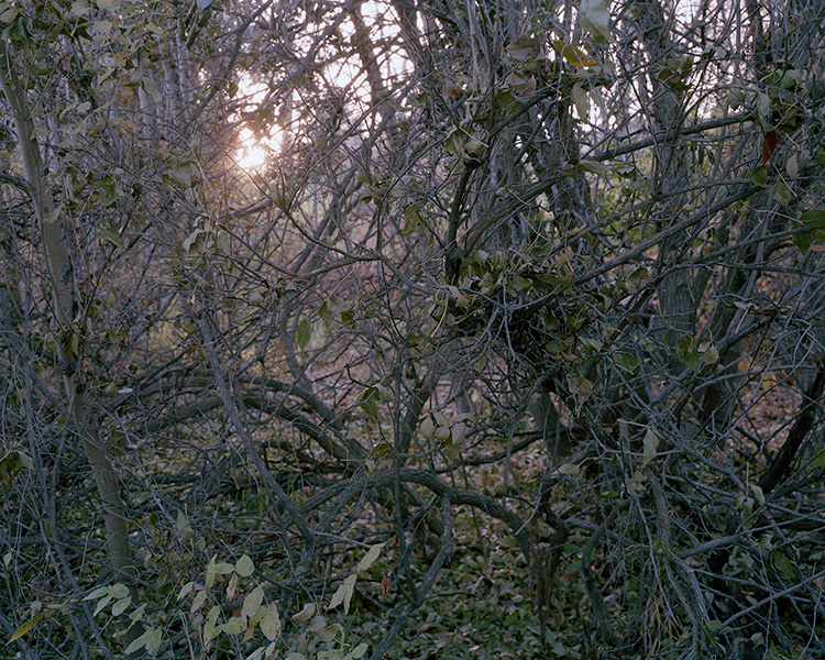 Sun Through the Thicket