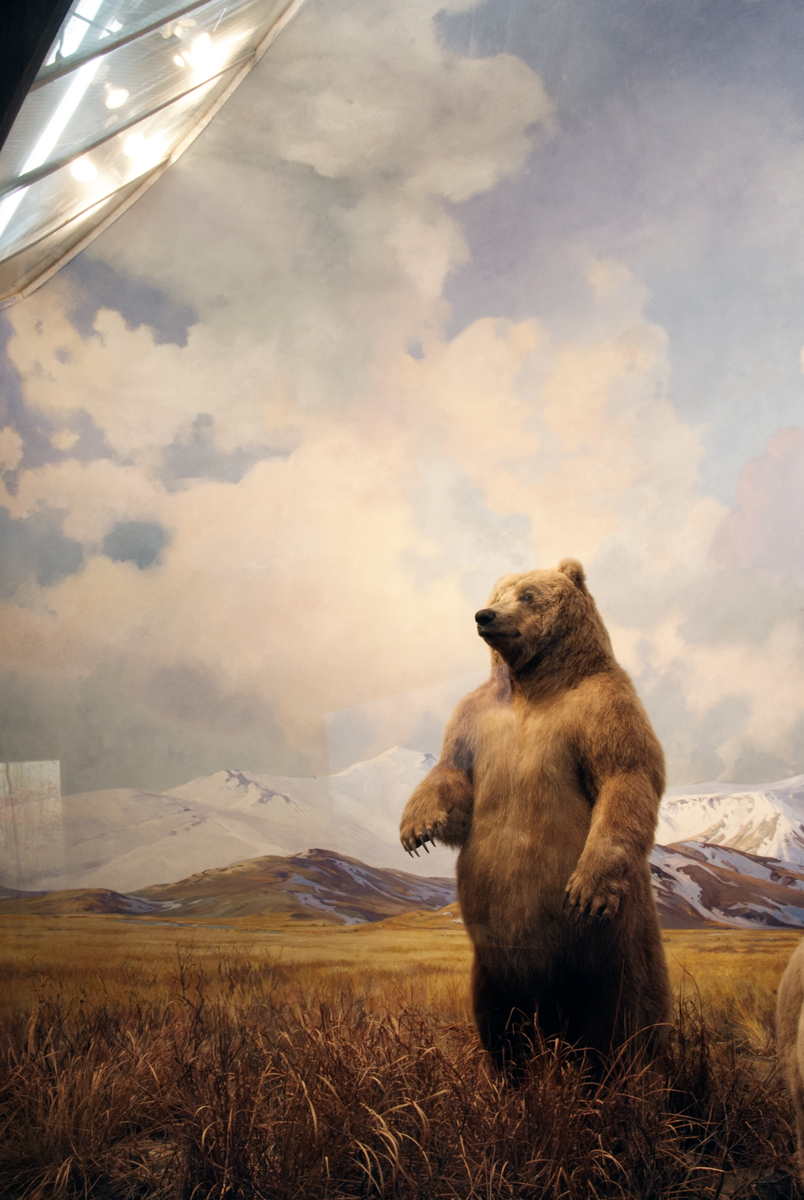 Bear, American Museum of Natural History, New York, New York 201
