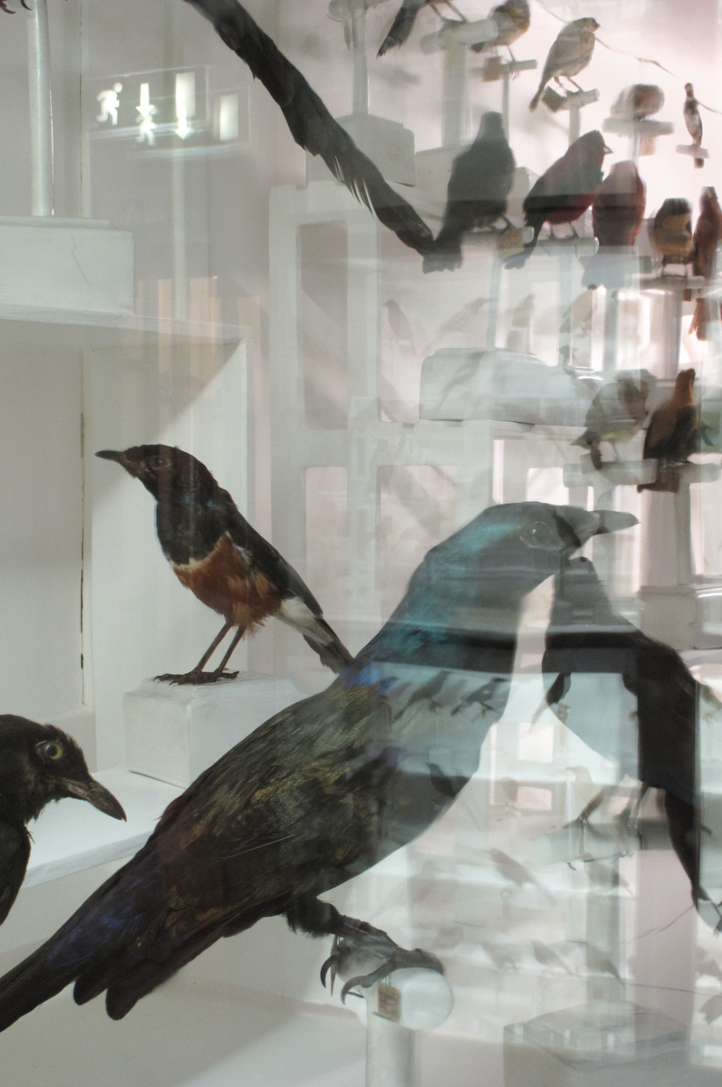 Birds, Museo di Storia Naturale, Florence, Italy 2011
