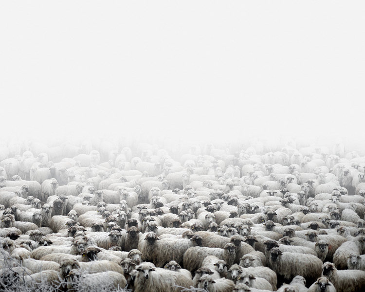 Sheep farm (Silvasu de Sus, West Romania), 2011
