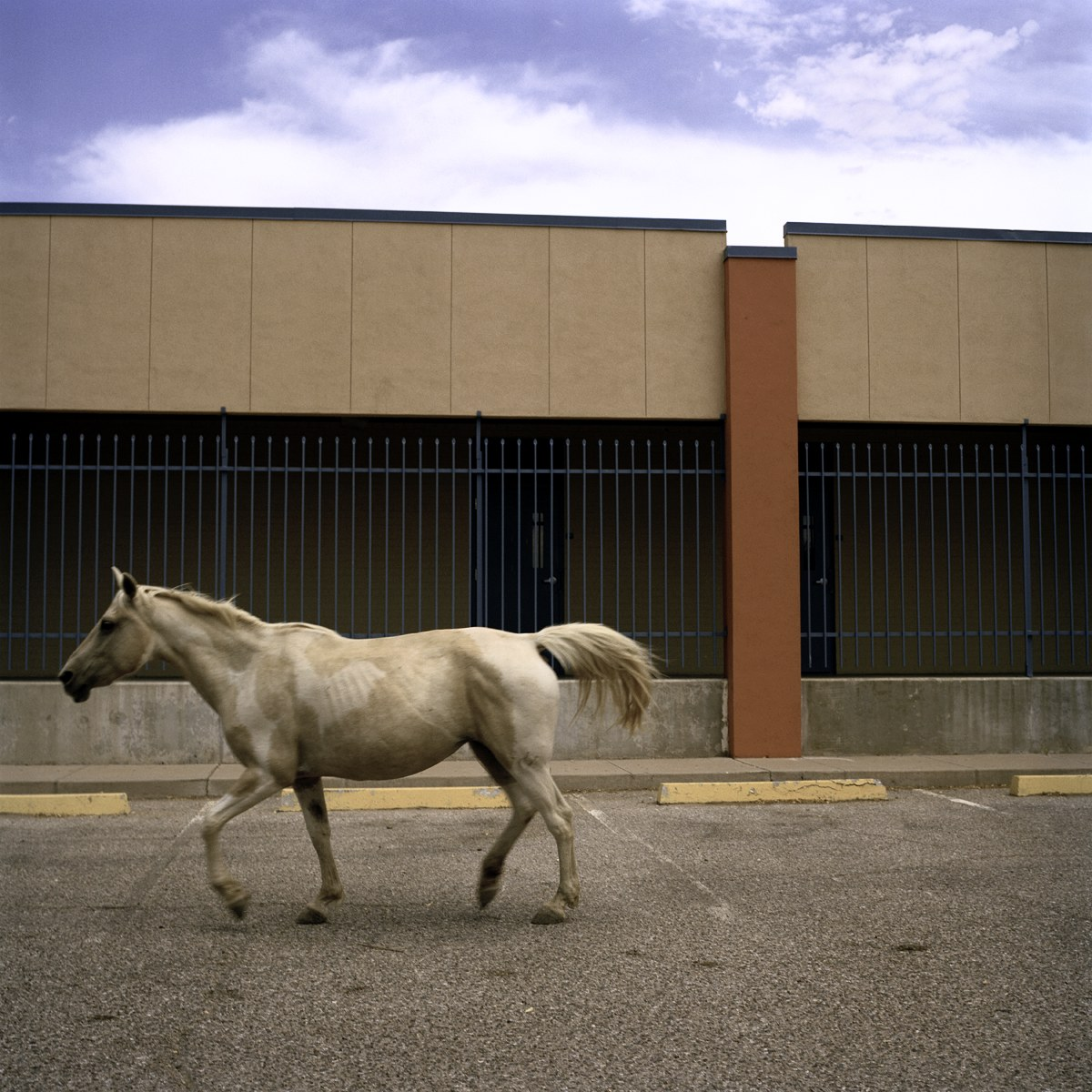Town of horses, 2012