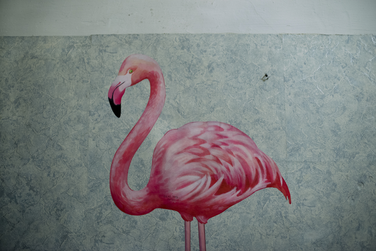 17-Pink-Flamingo--Coced_o