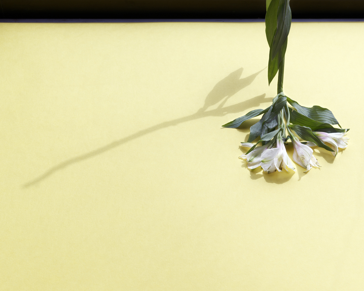 SaraRomani_Flower-with-shadow_06_o