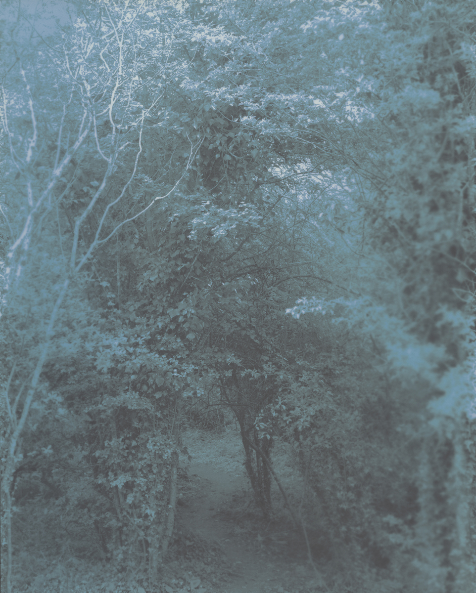 Pathway to the Shire, 2012 8 x 10 Disappearing Photograph on Gelatin Silver Paper, First Exposure