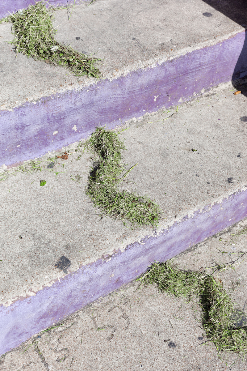 Green Grass and Purple Steps and a Used Cigarette