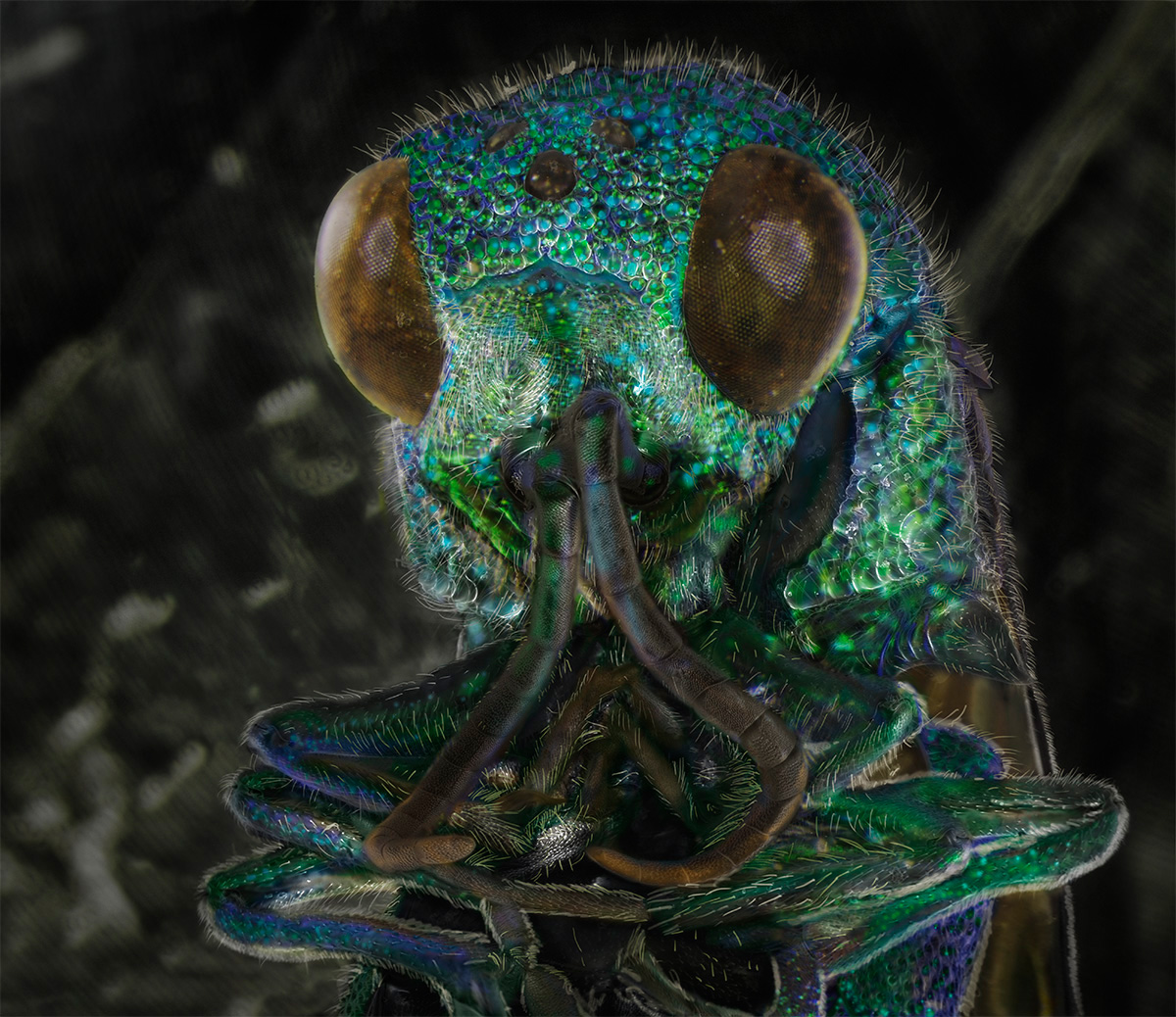 Window Screen, August 1st [Cuckoo Wasp] Date: 2013