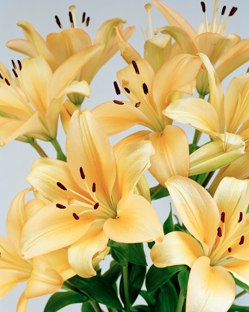 08-Ann-Woo_Yellow-Lillies_2009