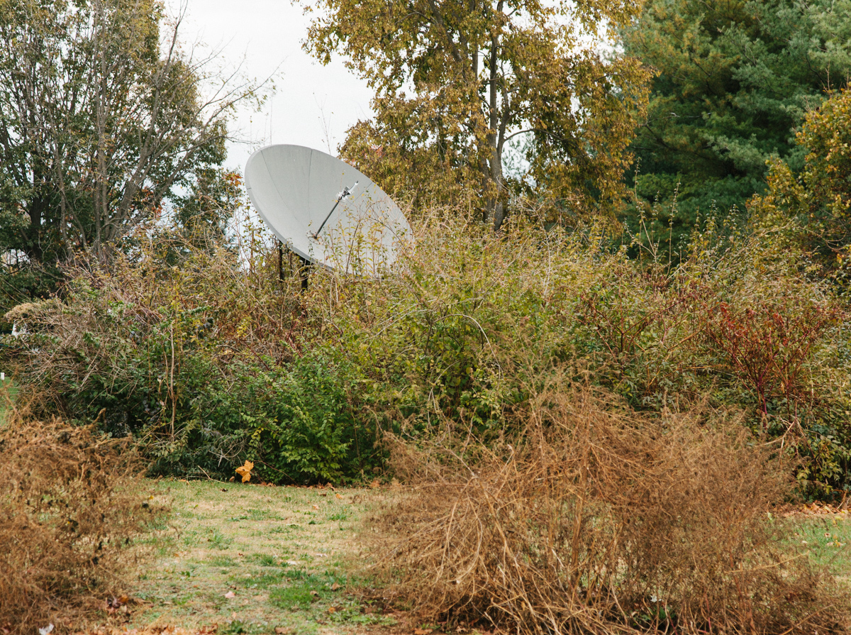 Satellite Dish Obscured by Overgrown Shrubbery