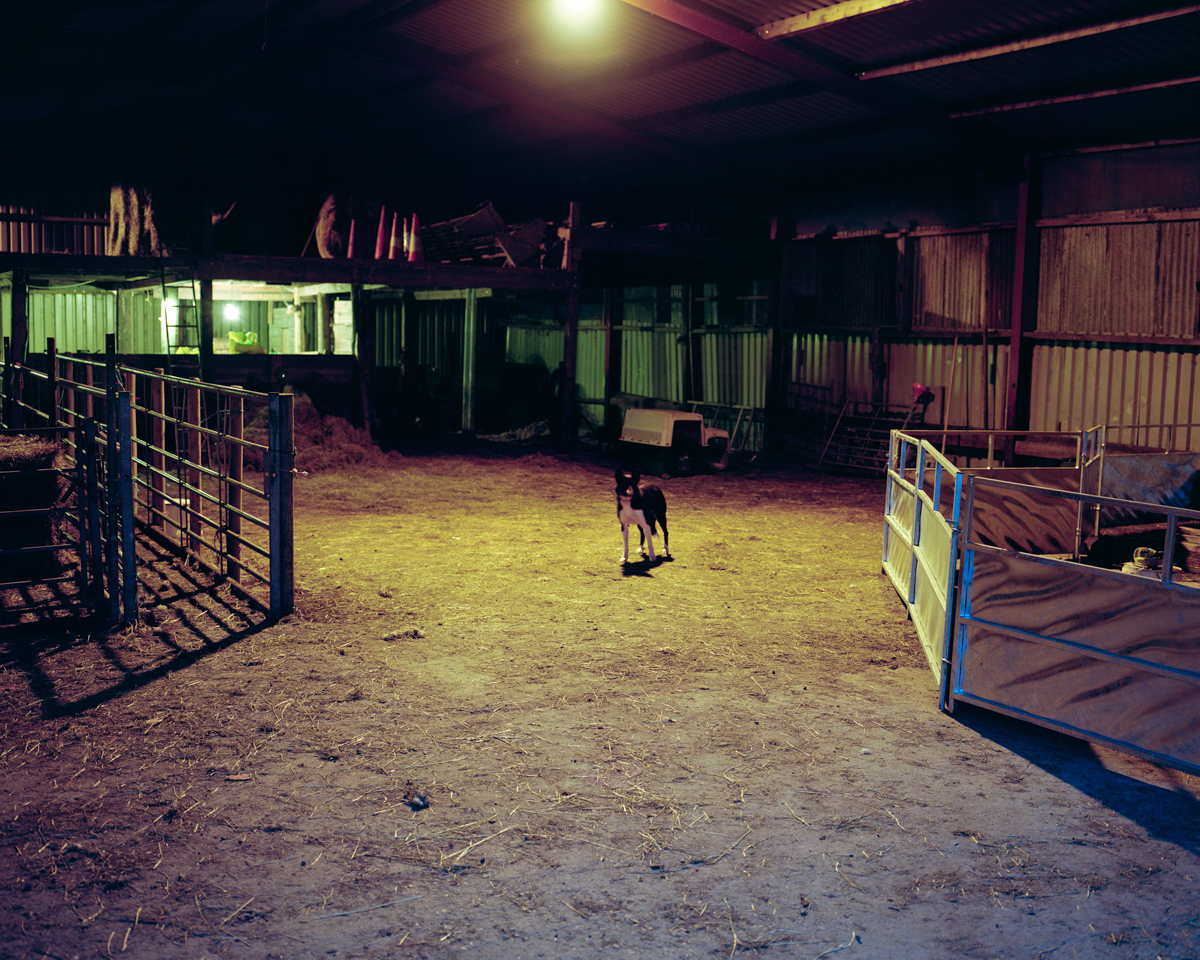 Untitled (Dog in Barn, Dusk)