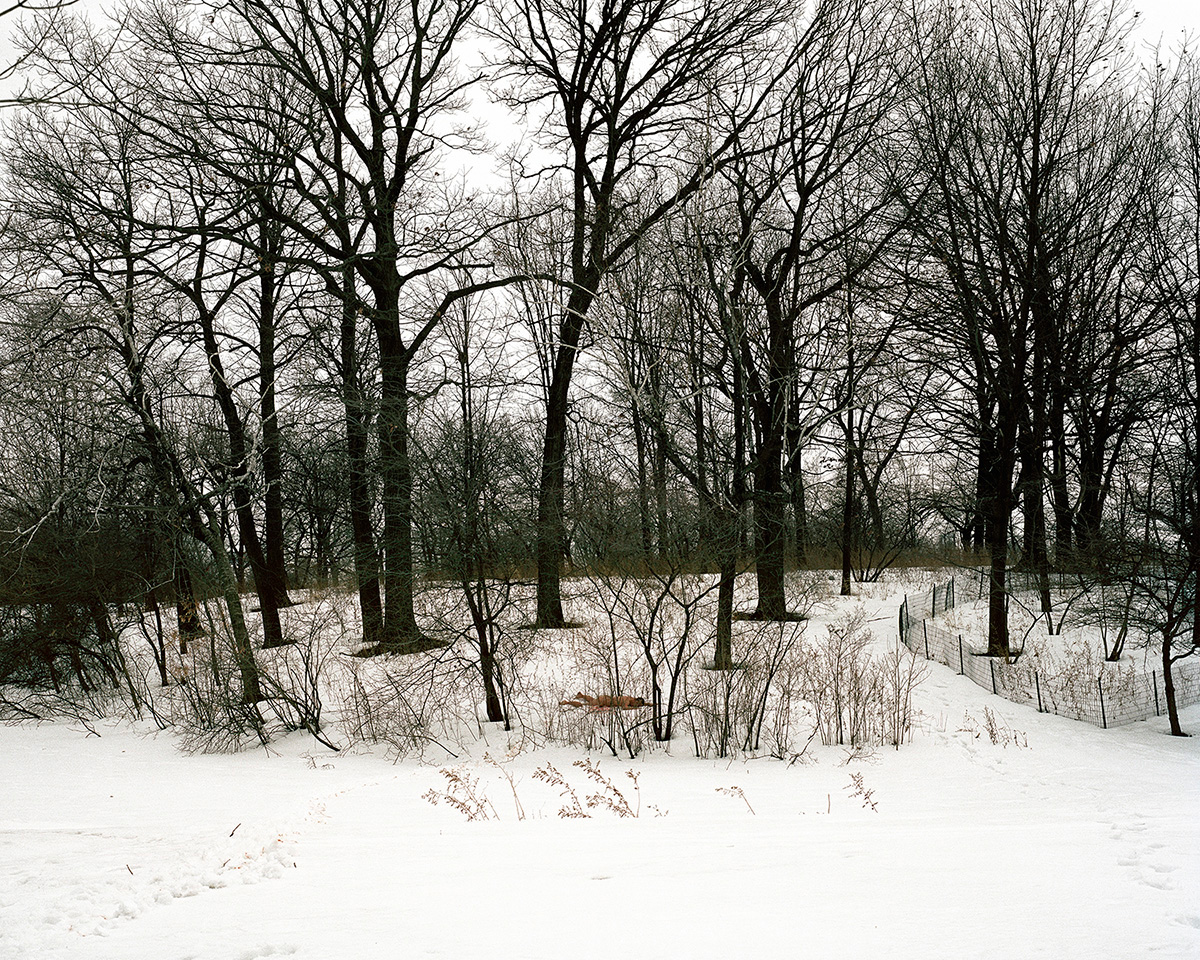 Snow Ground and Forest, 2014