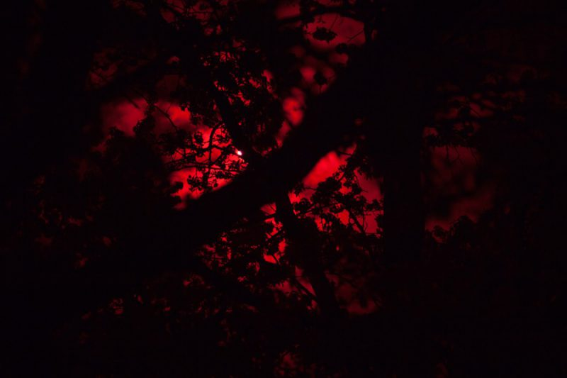 Infrared Tree, 2016